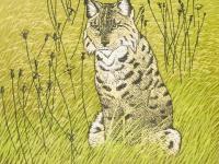 07-Andrea-Rich-European-Lynx