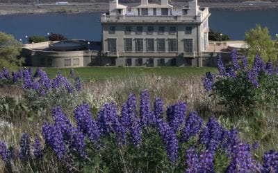 Stunning Wildflowers from Spring to Fall at Maryhill Museum of Art
